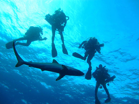 best-scuba-diving-places