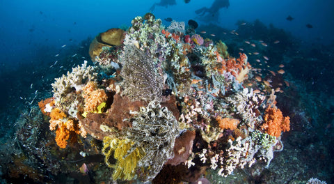 coral-reef-climate