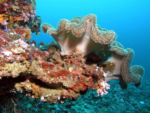 coral-reef-ecosystem