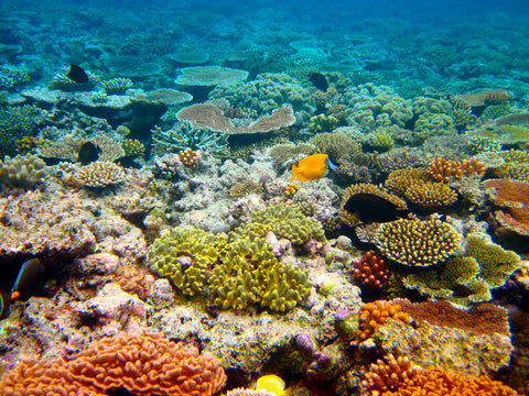 great-barrier-reef-coral