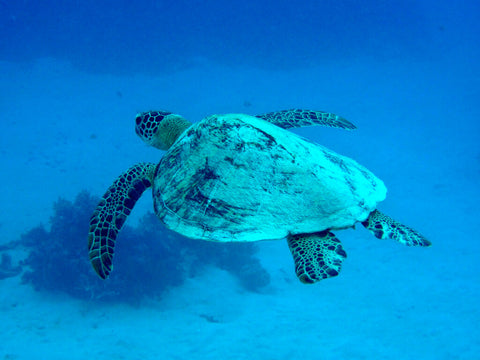 pictures-great-barrier-reef