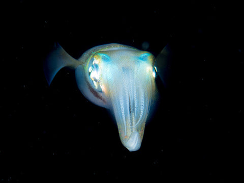 pictures-of-underwater-animals