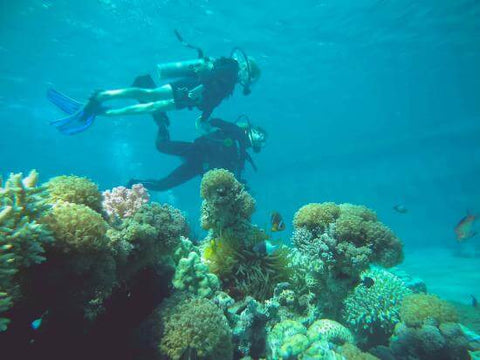 scuba-diving-experience