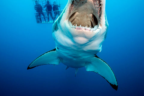 scuba-diving-sharks-florida
