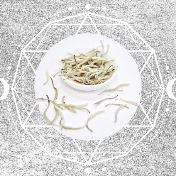 7 Health Benefits of White Tea