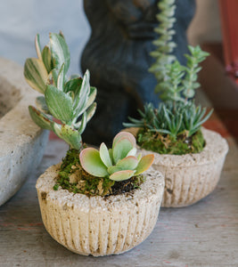 Petite Scalloped Planter