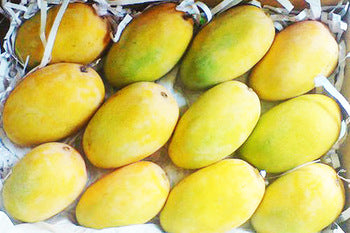 Kesar Mango box of 10-12