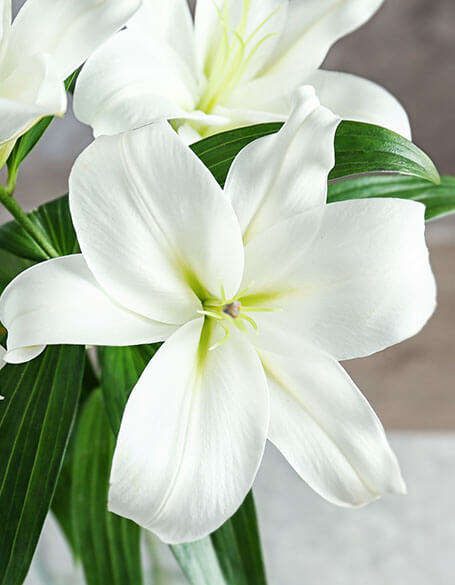 Lilies - Flower Gifts New York - flower delivery