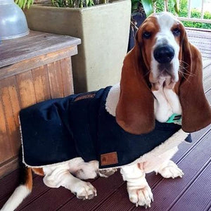 Waterproof Dog Coat - Collar Design