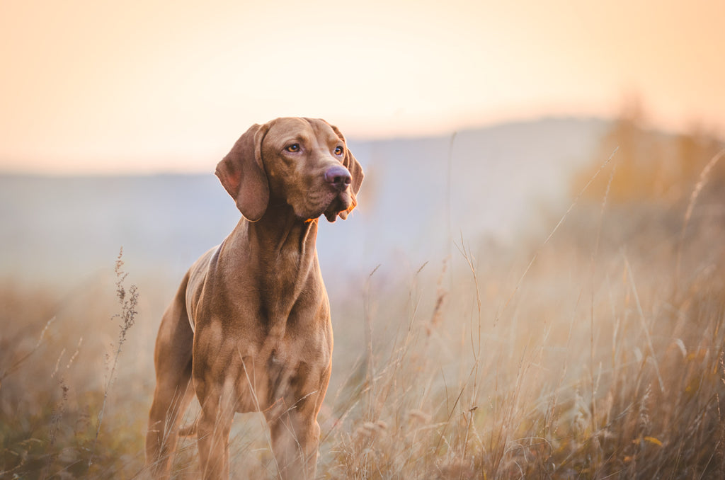 dog in autumn time in a field