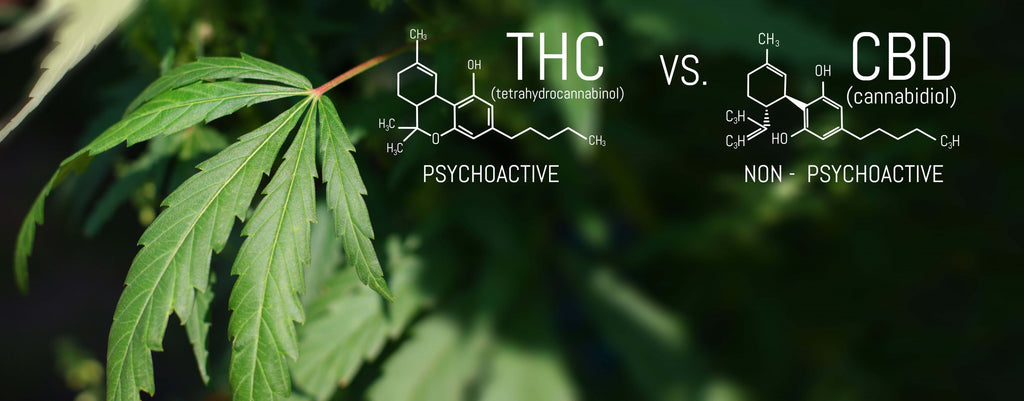 the chemical difference between cbd and thc