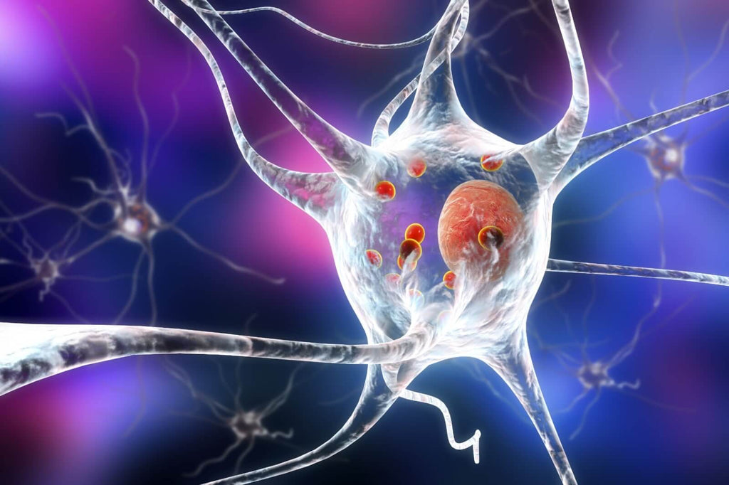 brain cell affected by Parkinson's Disease