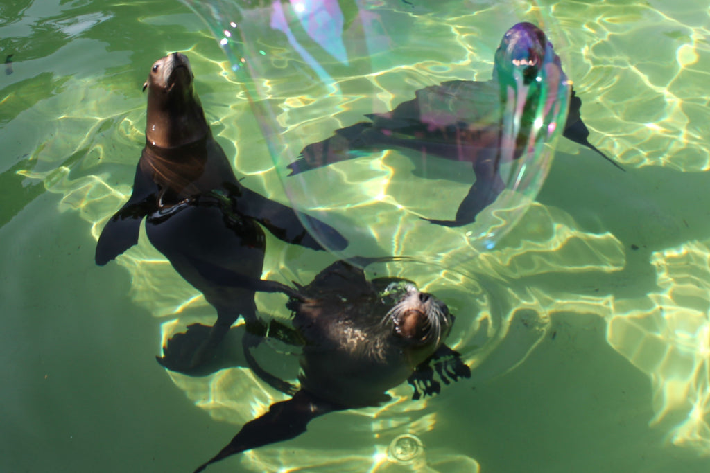 North Wales Zoo uses Dr Zigs Giant Bubbles for wonderful interactions with animals.