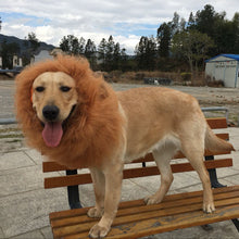 Load image into Gallery viewer, Lion Mane Wig for Large Dogs