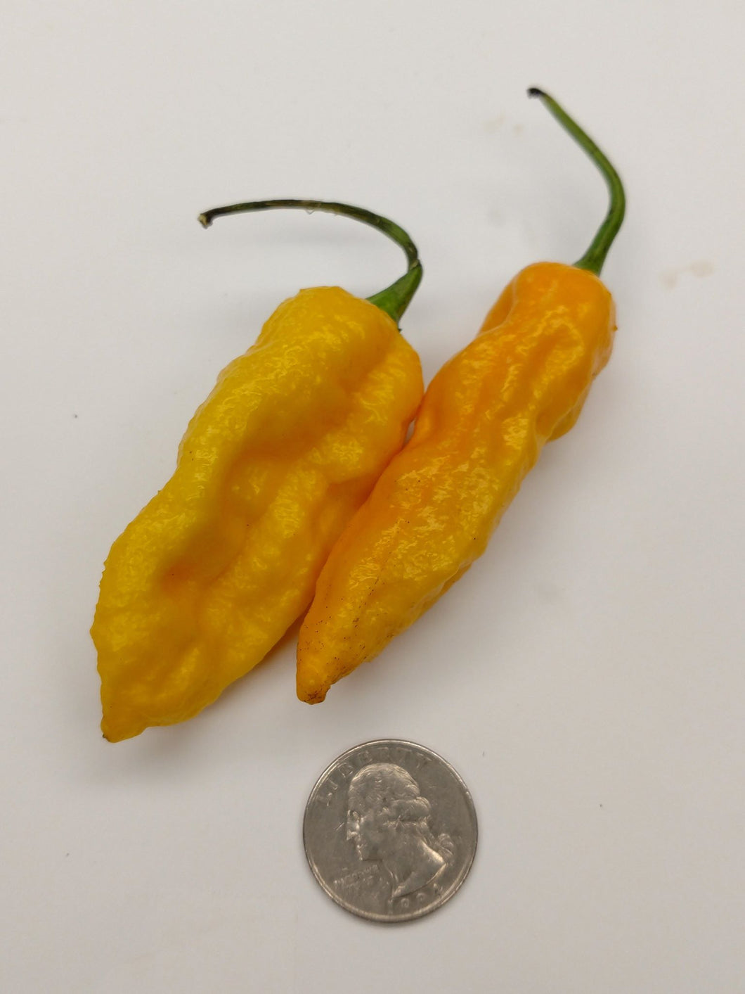 Yellow Fatalli (1/4 lb)