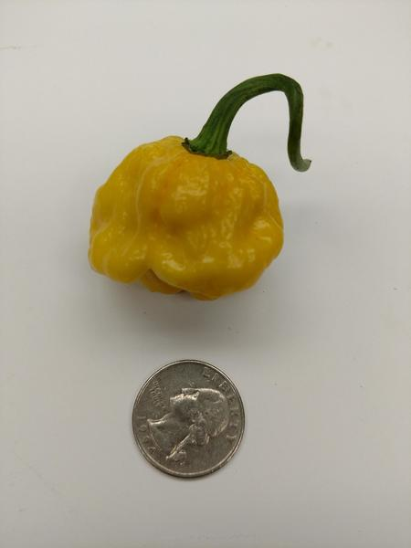 Seeds - MOA Scotch Bonnet