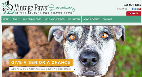 Vintage Paws Sanctuary for Senior Dogs