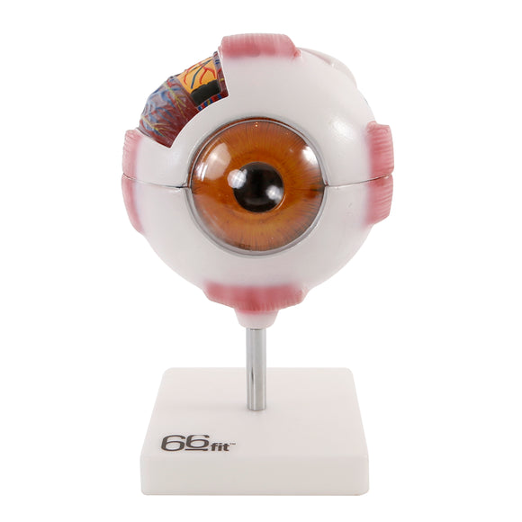 66fit Giant Eye Model - White