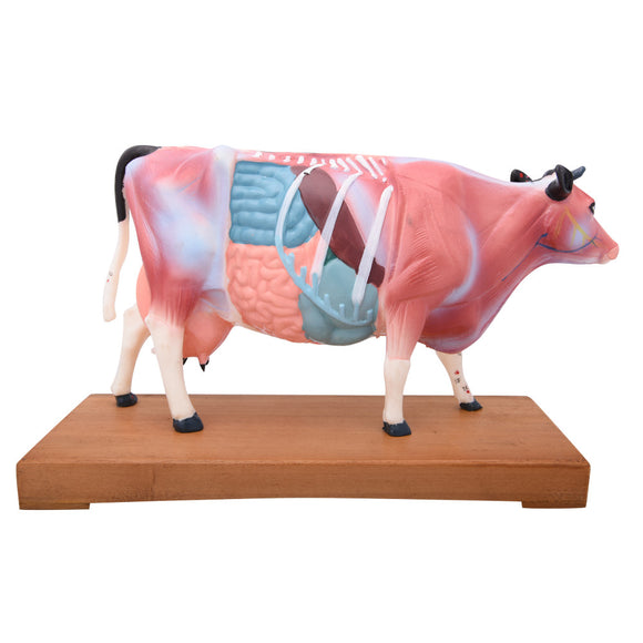 66fit Cattle Acupuncture Model