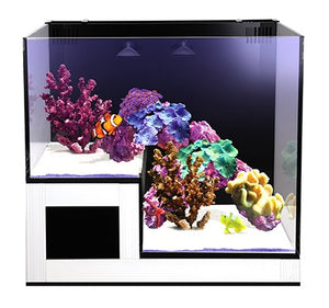 NUVO Concept Abyss Panorama Clearview Lid