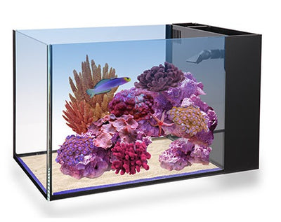 NUVO Fusion Peninsula 14 ClearView Lid
