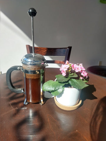 A full french press and a flowering succulent sit in the sunlight in the Java Blend Cafe