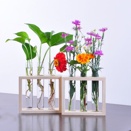 Wall Hanging Test Tube Propagation Station