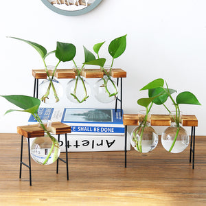 Tabletop Glass Propagation Stations with Metal Stand