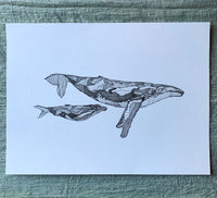 Whale Study - Meredith Richey Art