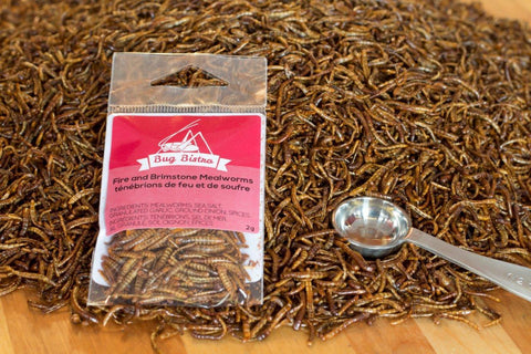 Fire & Brimstone Mealworms