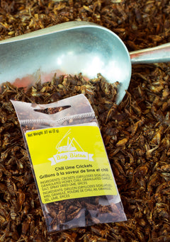 Chili Lime Crickets