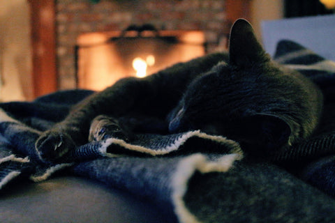 Cat in front of a fire