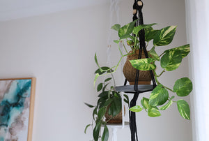 Large Kokedama Swing