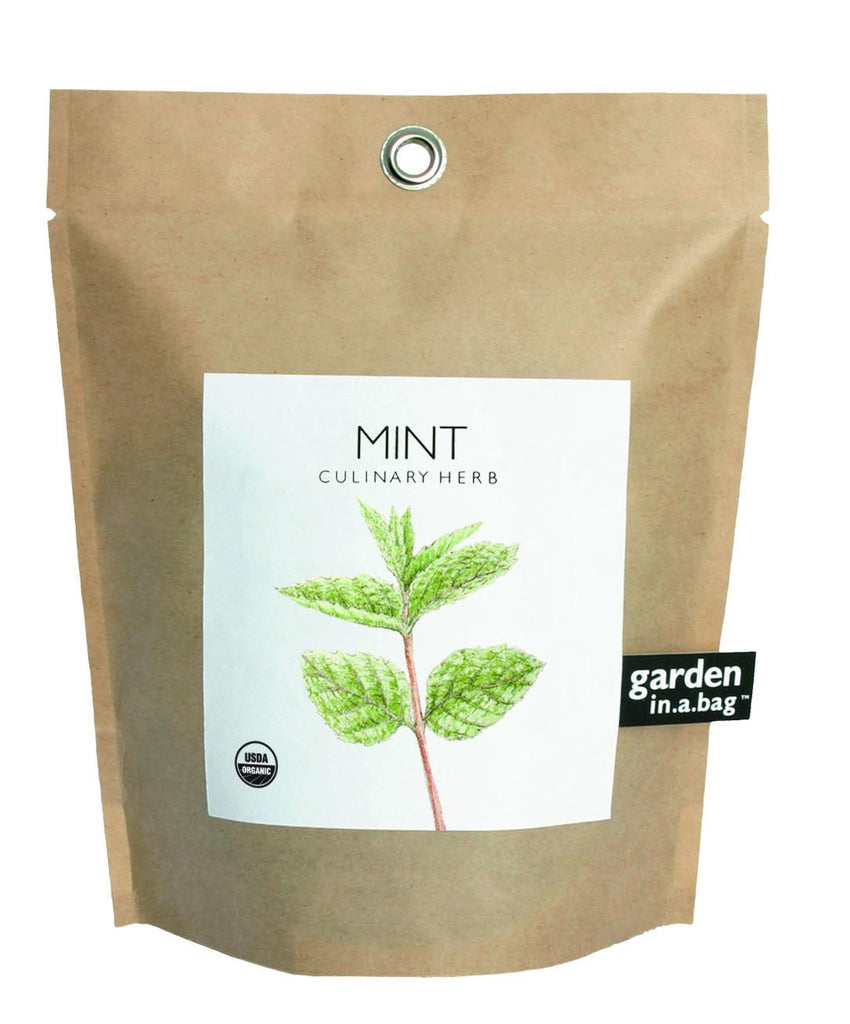 Mint Garden-in-a-Bag