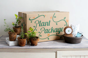 Blooming Bonsai Plant Package