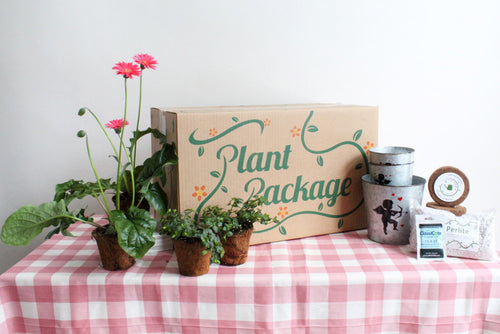 Bundle of Love Plant Package