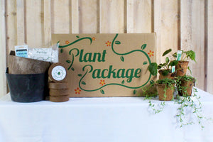 Home for the Holidays Plant Package