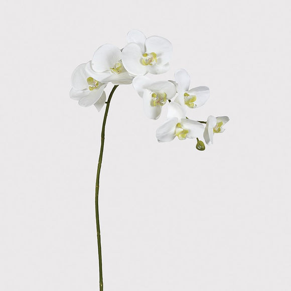 Orchid/White