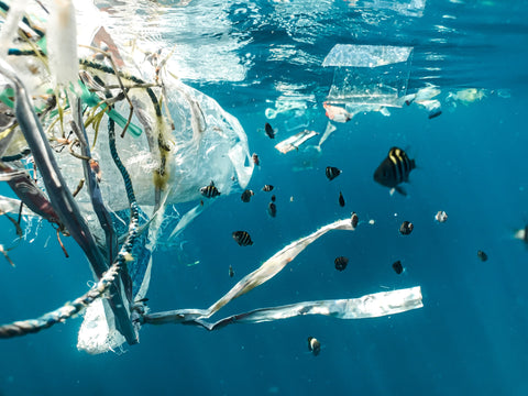 A group of fish swimming in the water surrounded by plastic waste