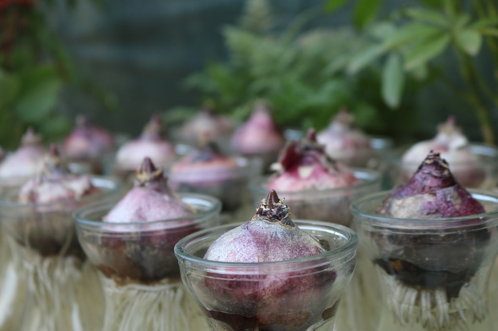 Regrow vegetables from their stumps to reduce waste and reduce consumption