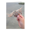 Meghan Nathanson Artistry color photo of child's hands holding a crab on the beach on folded greeting card