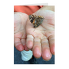 Meghan Nathanson Artistry color photo of child's hands holding a butterlfy on folded greeting card