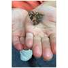 Meghan Nathanson Artistry color photo of child's hands holding a butterlfy on mini canvas print