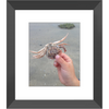 Meghan Nathanson Artistry color photo of child's hands holding a crab on the beach 8x10 framed print