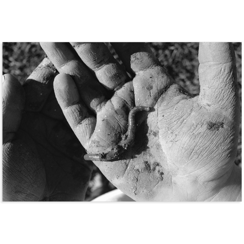 Meghan Nathanson Artistry black and white photo of a child's hands holding a worm on mini canvas print