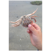 Meghan Nathanson Artistry color photo of child's hands holding a crab on the beach on mini canvas print
