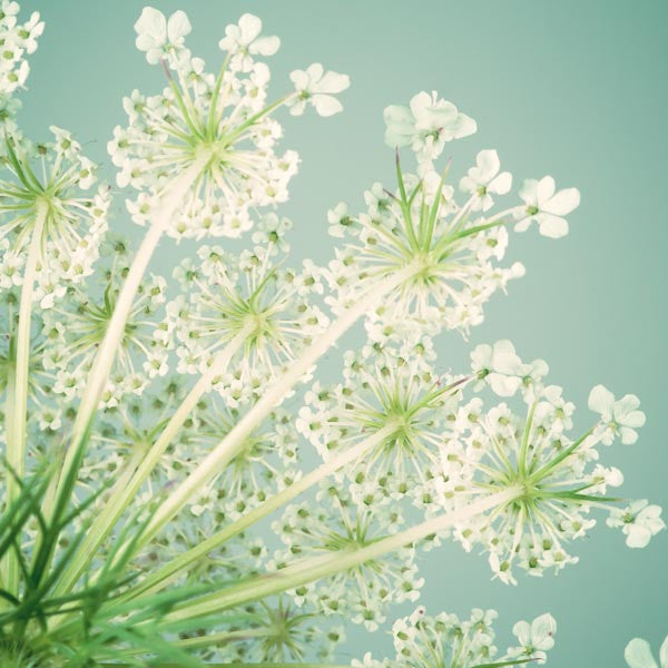 "Set of 3 Prints, Floral Wall Art Set ""Queen Anne's Lace"""