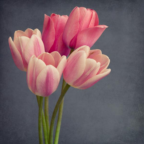 "Flower Photography Wall Art Print ""Pink Tulips No.2"""