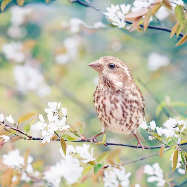 "Set of 4 Prints, Fine Art Photo Set ""Birds in Spring"""