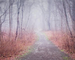 Fine art photograph of a woods path in fall in the fog